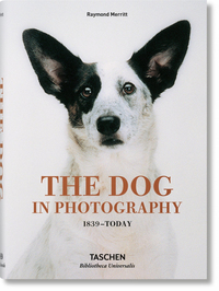 DOG IN PHOTOGRAPHY 1839ATODAY